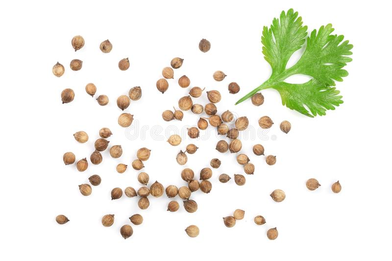 Coriander seed and leaves isolated on white background. Top view. Flat lay pattern.  stock photo