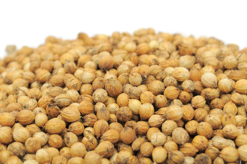 Coriander Seeds Stock Photography