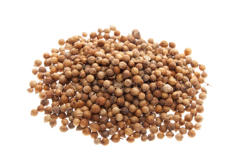 Download Coriander seeds stock image. Image of beverages, indoor - 25492269