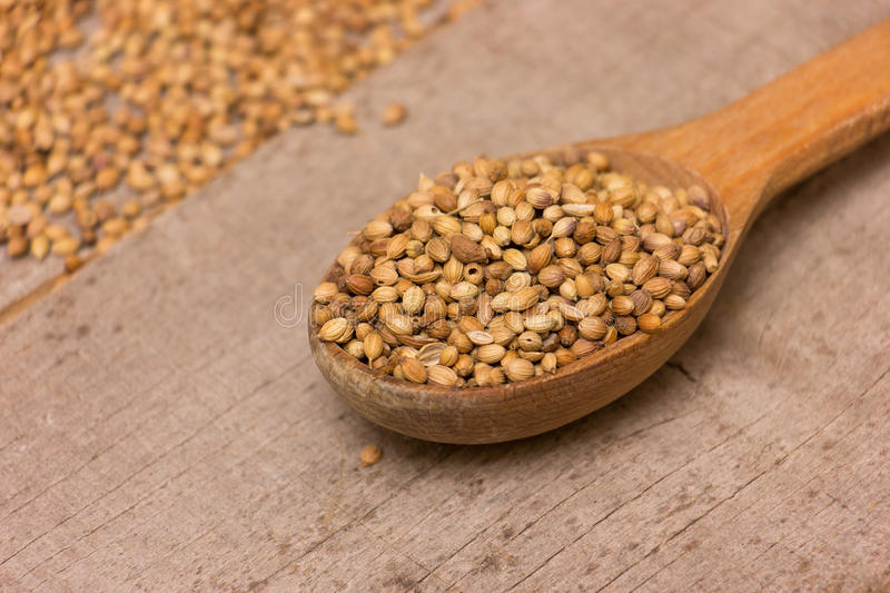 Coriander Seeds. In spoon on a wooden background royalty free stock images