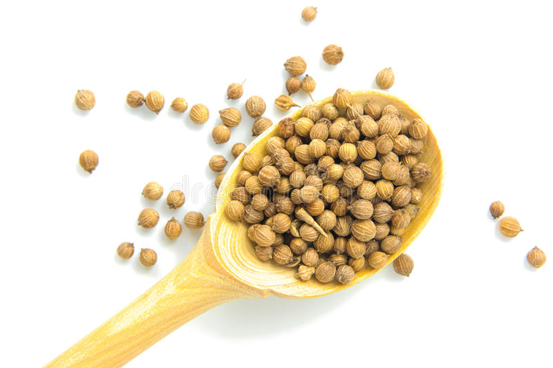 Coriander seeds in wood spoon stock images