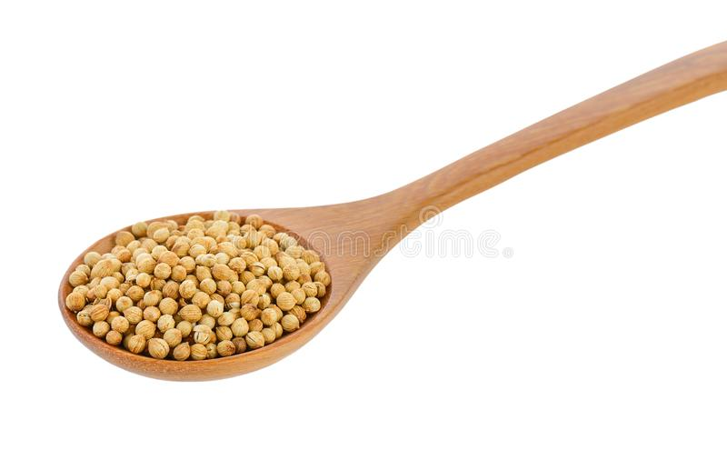 Coriander seeds in wood spoon on white background royalty free stock photography