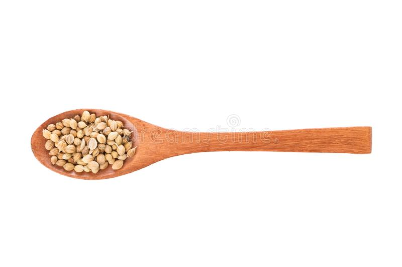 Coriander seeds on wooden spoon isolated on a white background. Spice in wooden spoon. Top view royalty free stock photo