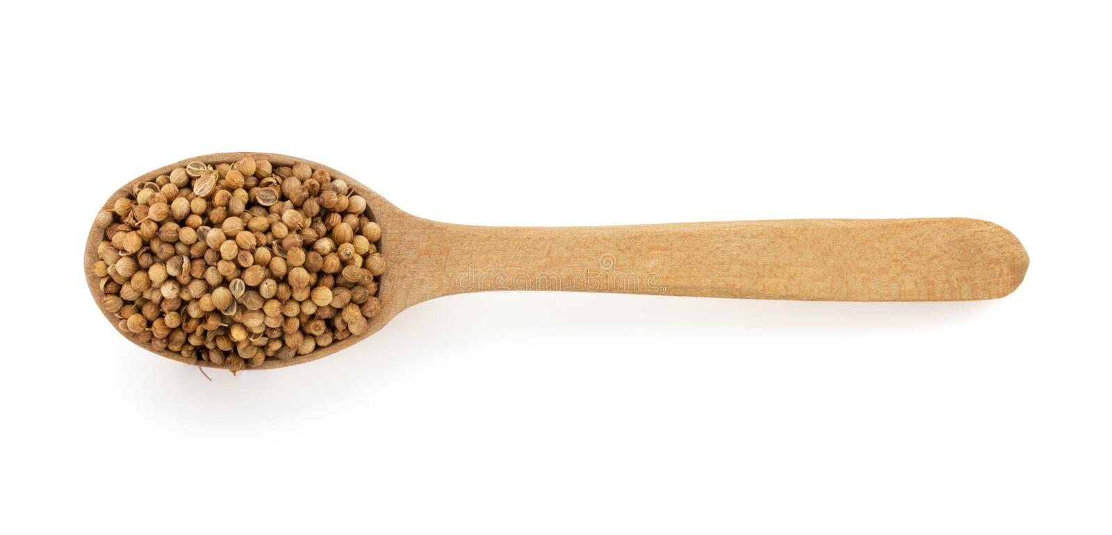 Coriander spices in spoon. On white background royalty free stock photography