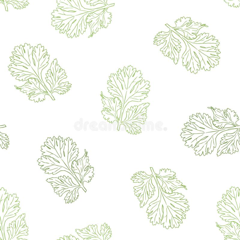 Coriander vector hand drawn illustration seamless pattern. Isolated spice object. Engraved style seasoning. Detailed organic product sketch. Cooking flavor vector illustration