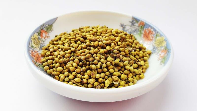 coriandre indienne d'épices sur le fond blanc images stock