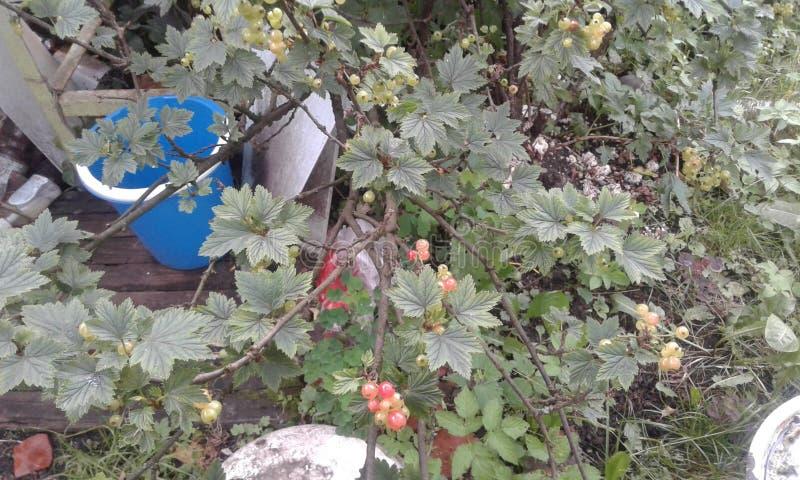 corinthe photos stock