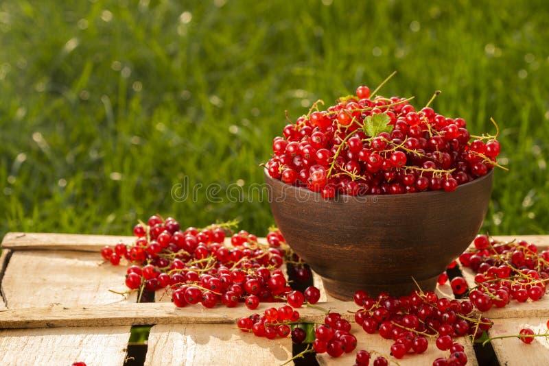 Corinto vermelho das bagas no jardim imagens de stock