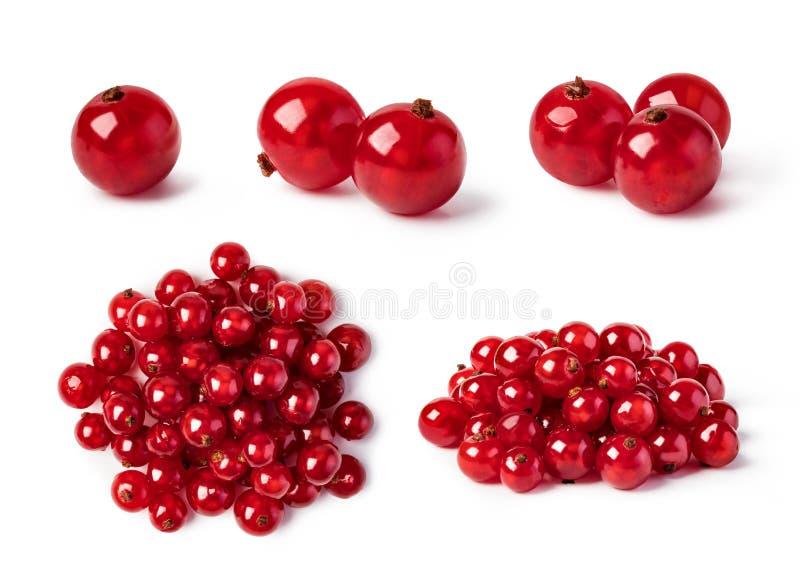 Corintos vermelhos fotografia de stock