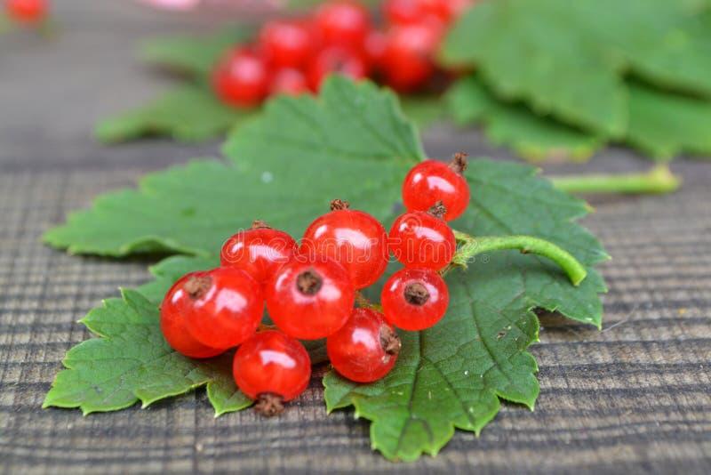 Corintos vermelhos e bagas, em um fundo de madeira preto Fruta fresca da passa de Corinto vermelha foto de stock royalty free