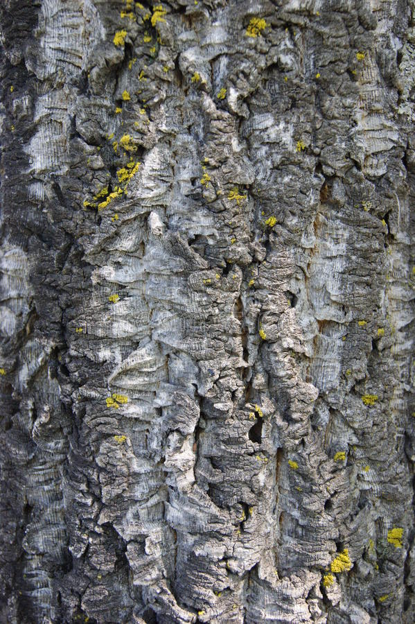 Download Cork stock photo. Image of nature, texture, natural, stopper - 14521334