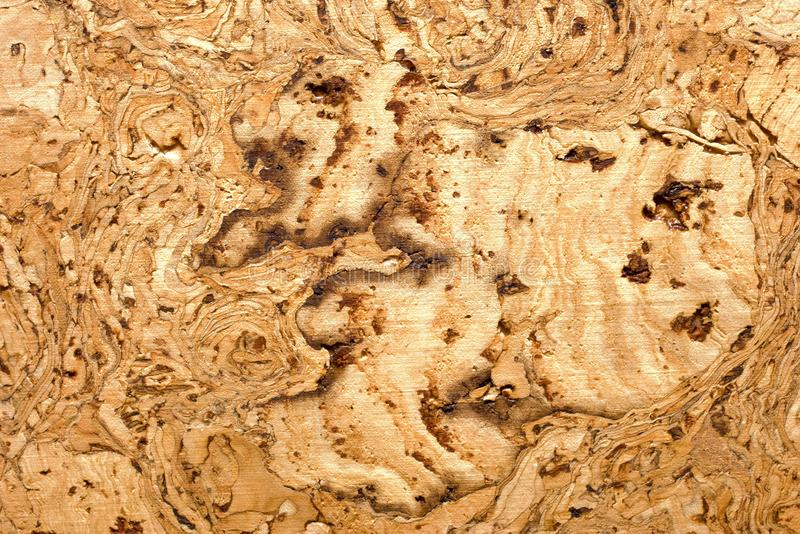Download Cork background stock photo. Image of natural, horizontal - 14853666
