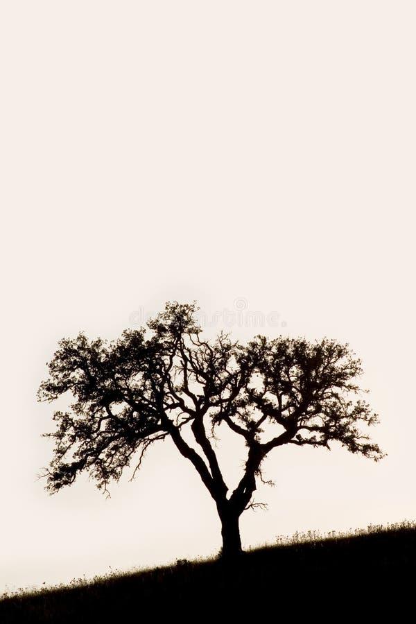 Download Cork Oak stock image. Image of pastoral, rural, alentejo - 2834513