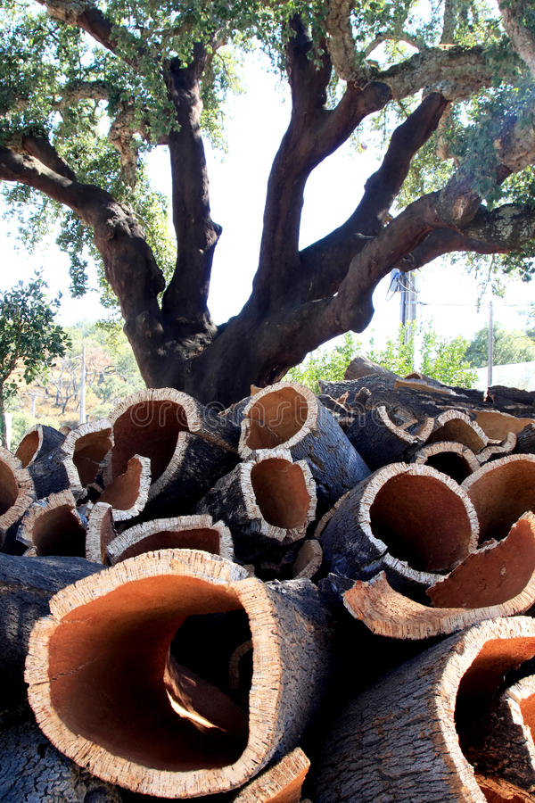 Free Cork Oak And Stacked Bark In Alentejo, Portugal Royalty Free Stock Photo - 22008955