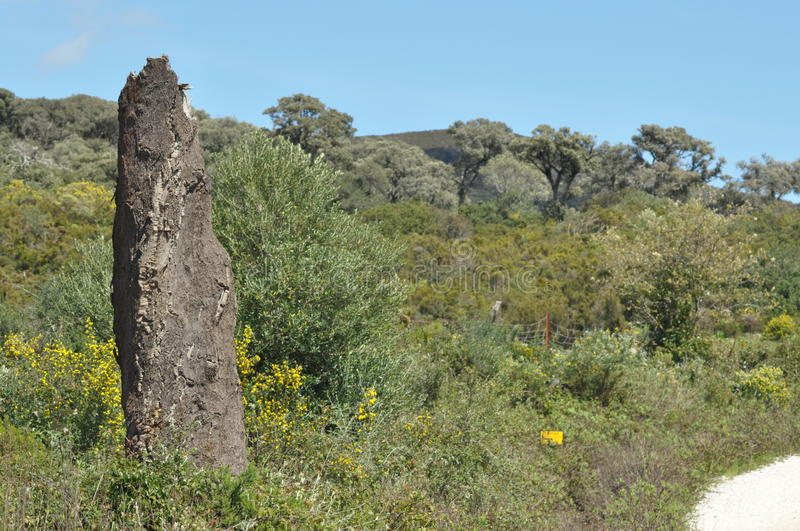 Download Cork Oak Forests In The Mountains Stock Photo - Image: 33339980