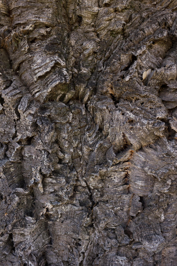 Cork schors stock afbeeldingen