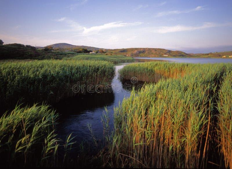 Cork van de provincie stock foto