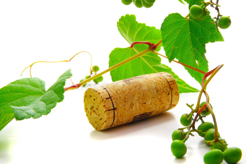 Cork and vine royalty free stock photo
