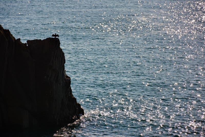 Cormorán en roca sobre el mar imágenes de archivo libres de regalías