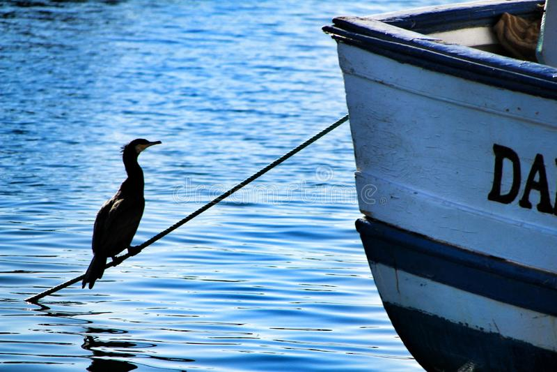 Cormoran noir prenant un bain de soleil dans le port de pêche de Santa Pola photo stock