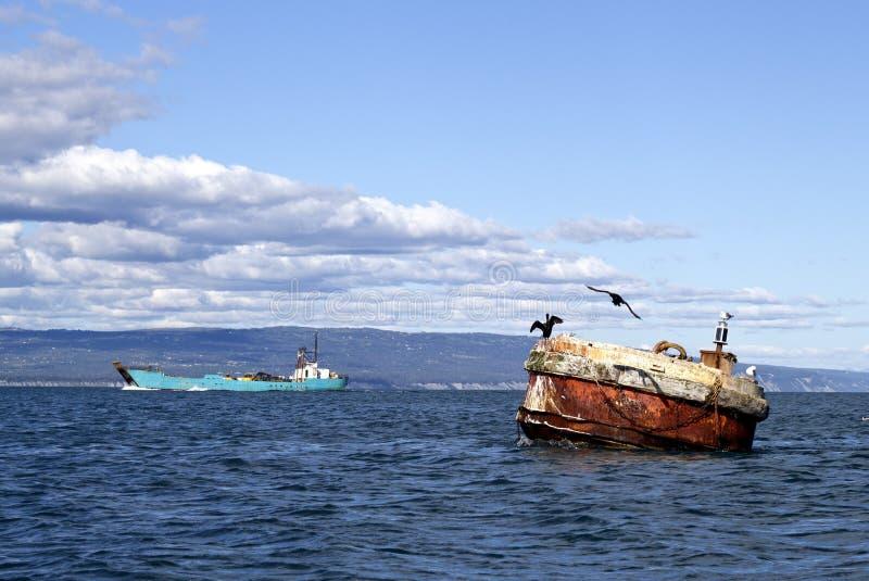 Cormoranes en una boya en la bahía fotografía de archivo libre de regalías