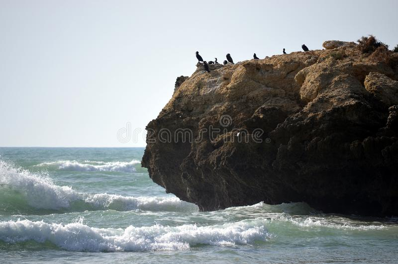 Cormorani su una roccia che guarda fuori fotografie stock