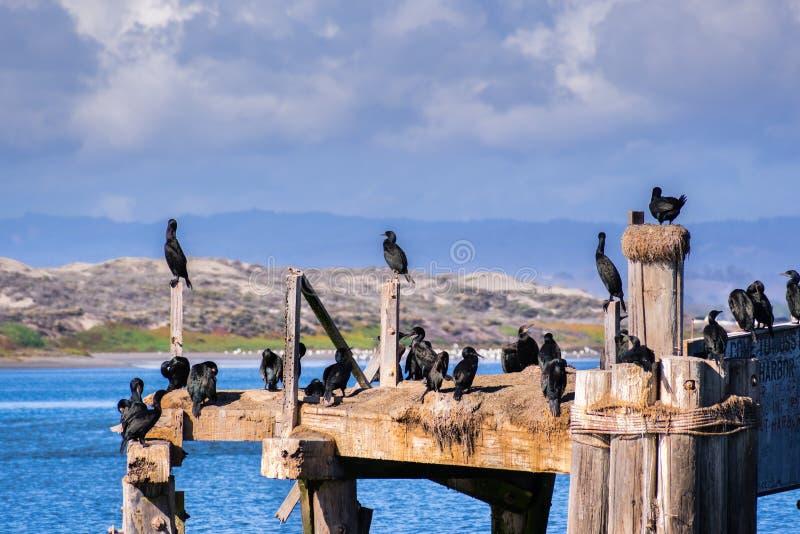 Cormorans reposant sur les plates-formes et les poteaux en bois à l'entran image libre de droits