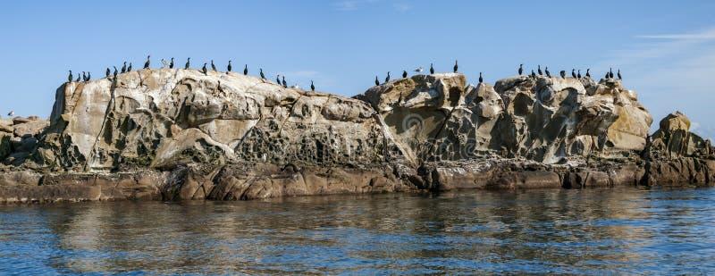 Cormorans sur l'îlot de roche en Colombie-Britannique du sud photos stock