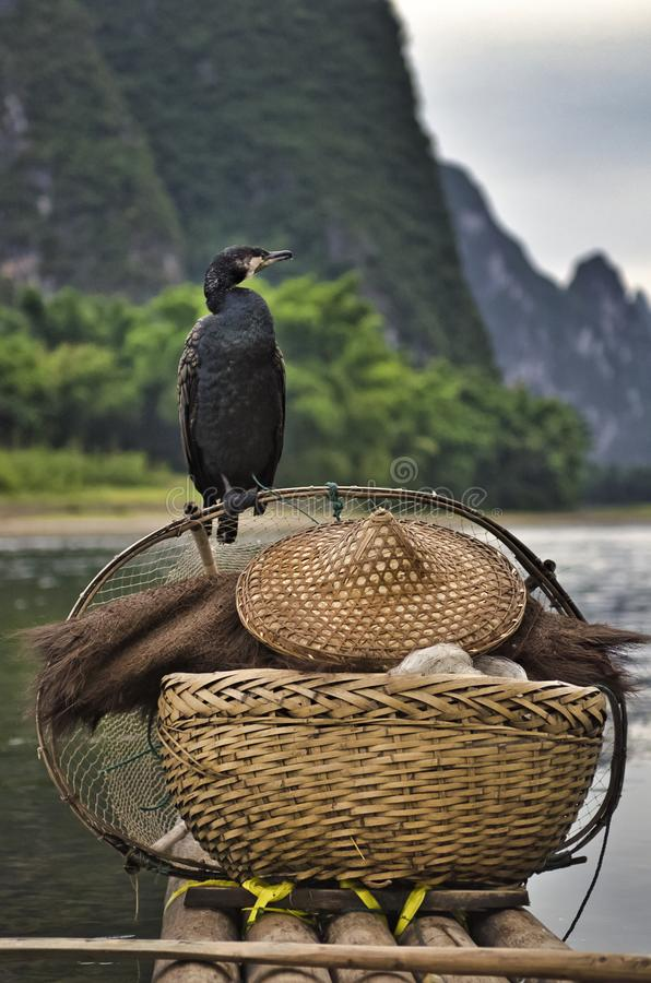 Cormorans sur le fleuve Lijiang photo stock