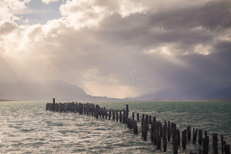 Cormorant国王殖民地,老船坞,纳塔莱斯港,南极Patag 库存照片