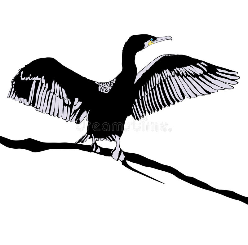 cormorant royaltyfri illustrationer