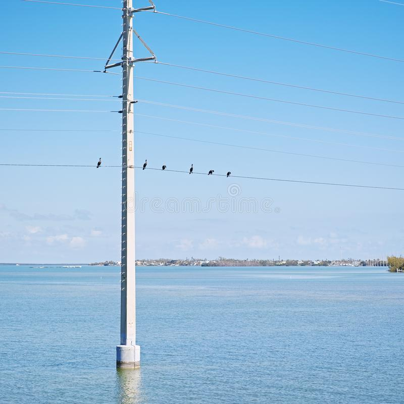Cormorant at electric wire looks like the musical note stock photography