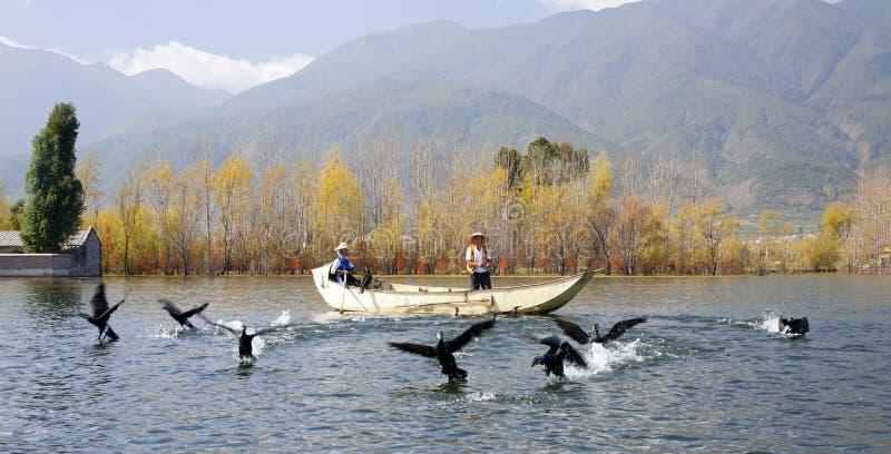 Cormorant pêchant en Chine image libre de droits
