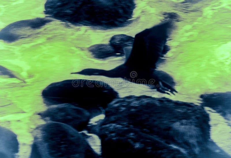 Cormorant, rocce ed astrazione del mare