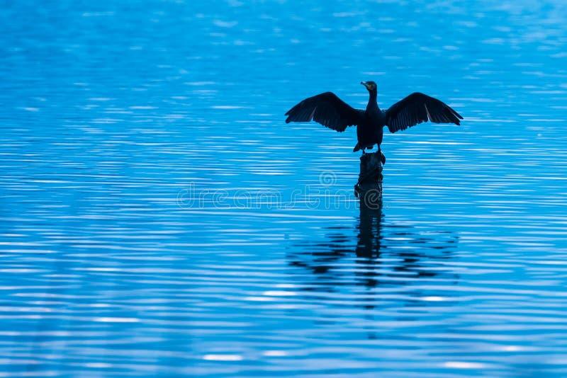 Cormorant séchant ses ailes dans le lac de Banyoles photos stock