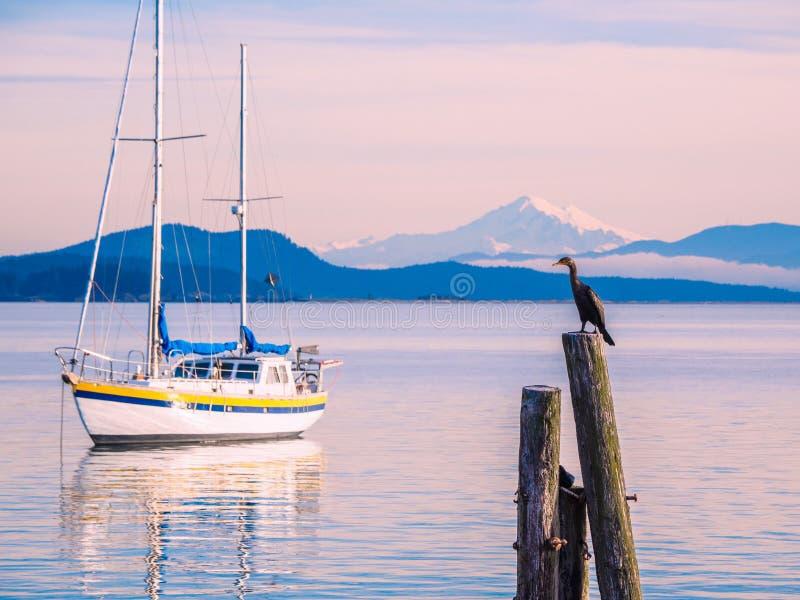 Cormorant sui mucchi alla riva Sidney, BC, isola di Vancouver, C fotografia stock