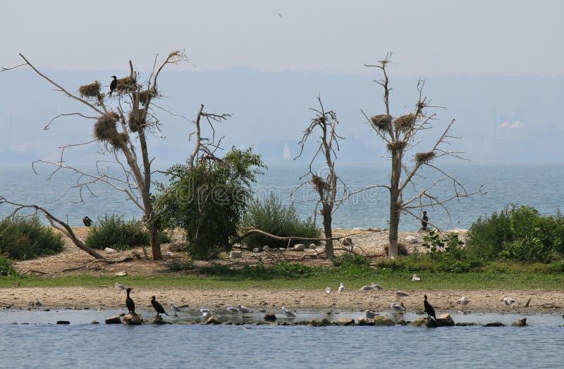 Cormorantreden i trees royaltyfri foto