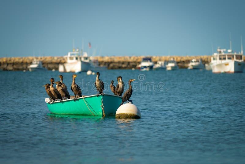 cormorants fotografia stock