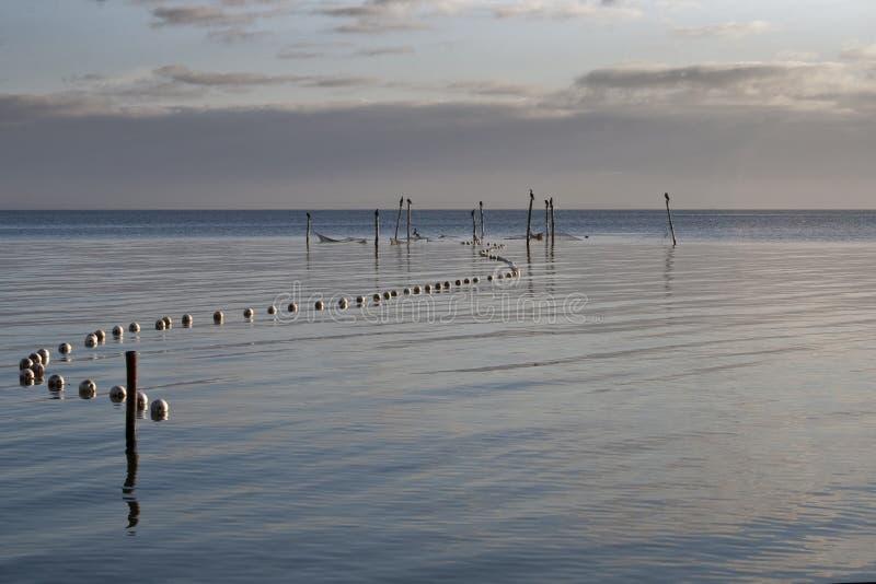 Cormorants em estacas da pesca imagens de stock royalty free