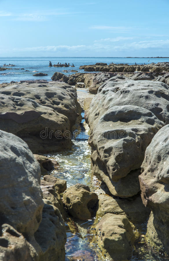 Download Cormorants Fishing From The Rocks Stock Image - Image: 33655745