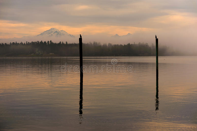 Cormorants and Mt. Baker. Cormorant birds rest on old pilings during a beautiful sunrise over Mt. Baker, Washington royalty free stock images