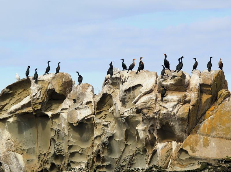 Cormorants and seabirds on the sandstone of the Belle Chain Islands, BC royalty free stock photography