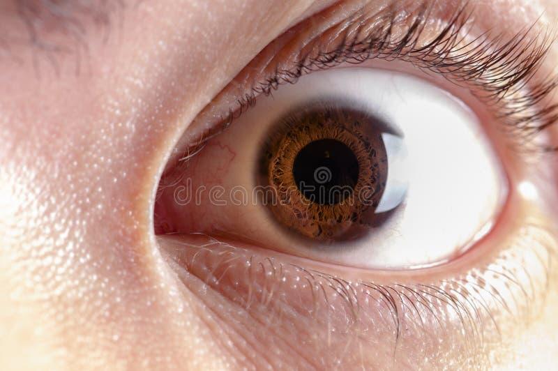Cornée d'iris d'élève d'oeil d'homme photo libre de droits