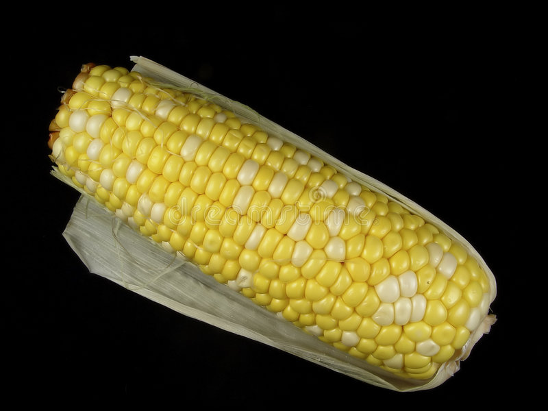 Download Corn stock photo. Image of kernels, vegetable, stalk, popcorn - 9460