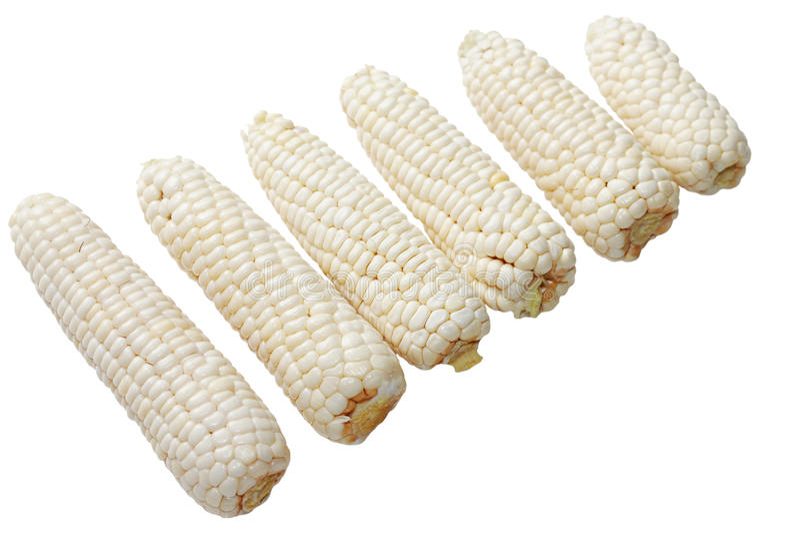 Download Corn stock photo. Image of color, nobody, food, increasing - 10911222