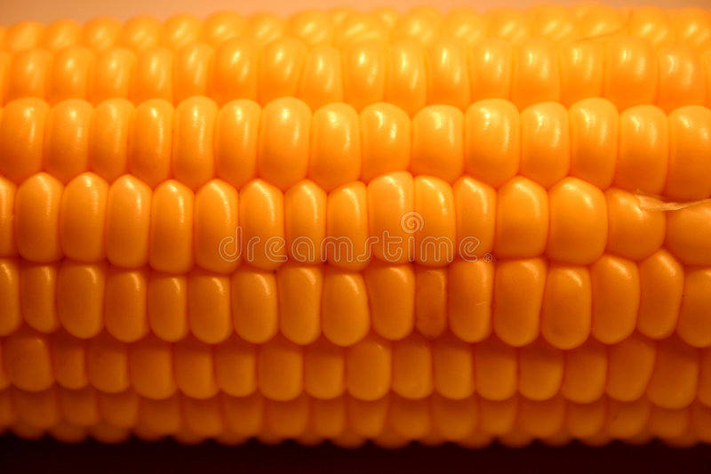 Download Corn stock photo. Image of healthy, texture, kernel, corn - 112924