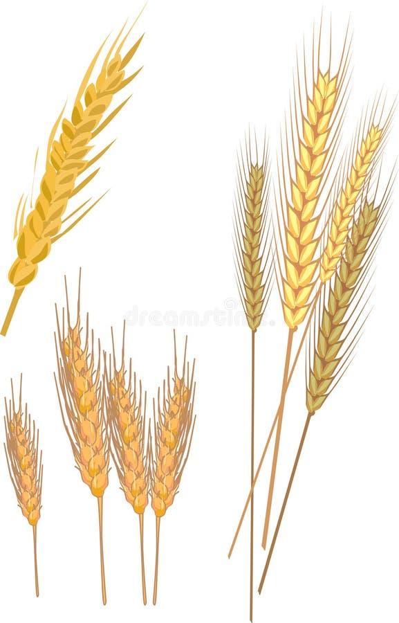 Download Corn stock vector. Image of grain, crop, color, logo - 11556014