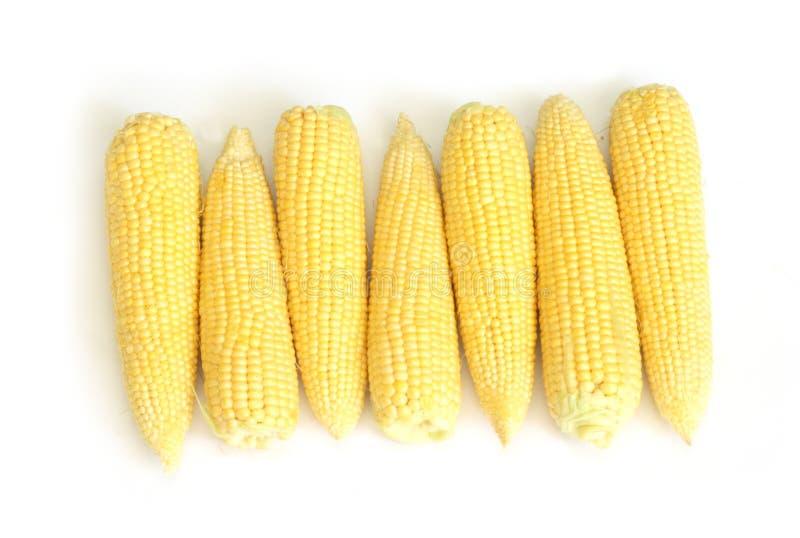 Corn stock photography