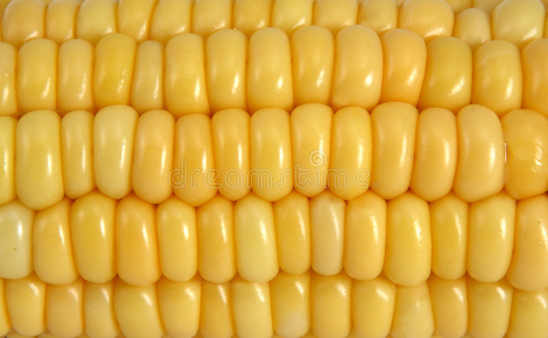Corn. Yellow corn background close up royalty free stock photos