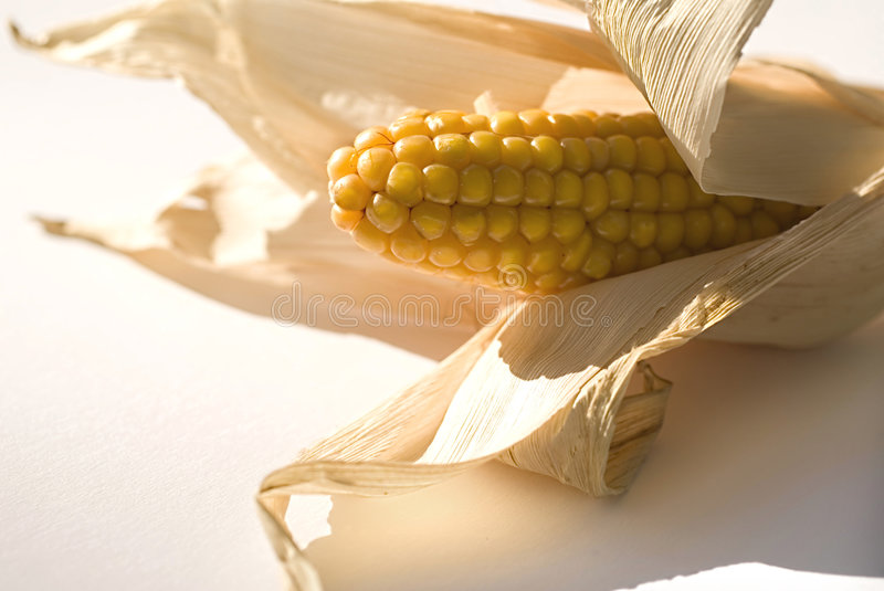 Corn. On the white background royalty free stock images